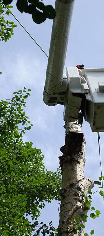 Certified Arborists in Beaumont