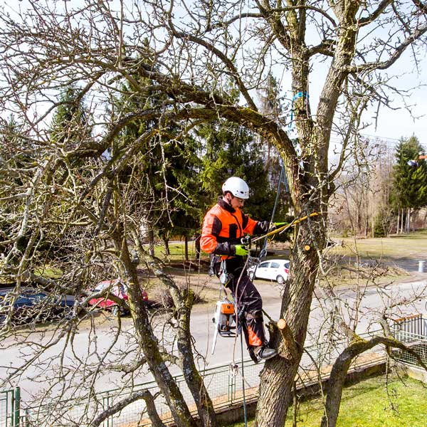Tree Pruning tip in Edmonton by arbor man tree care