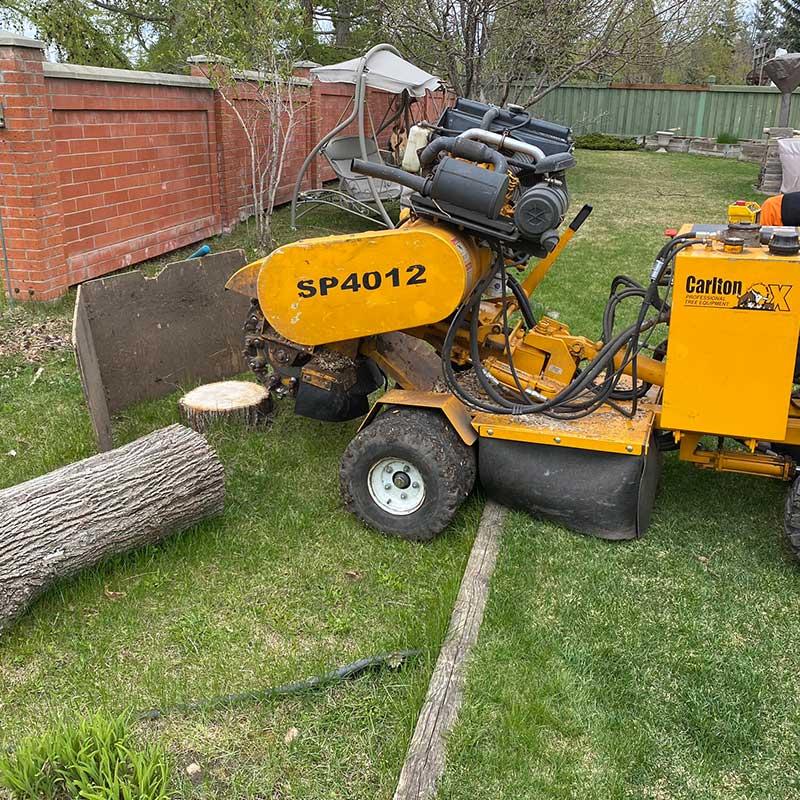 stump removal st albert