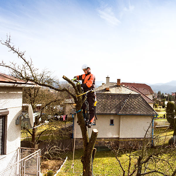 certified arborist removing top of a tree edmonton