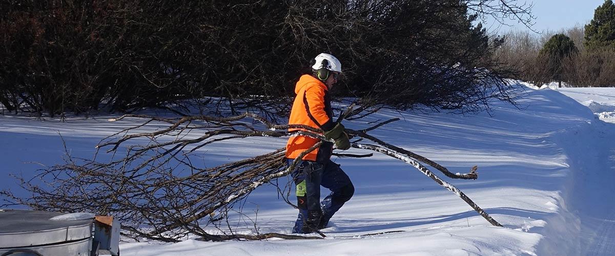 Tree Service in Edmonton